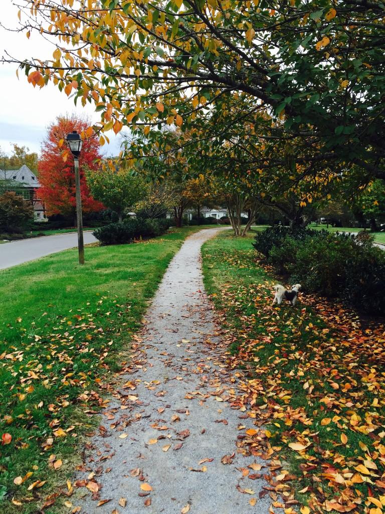 fall, leaves, fallen leaves, sequoya hills, knoxville blogger, neighborhood,
